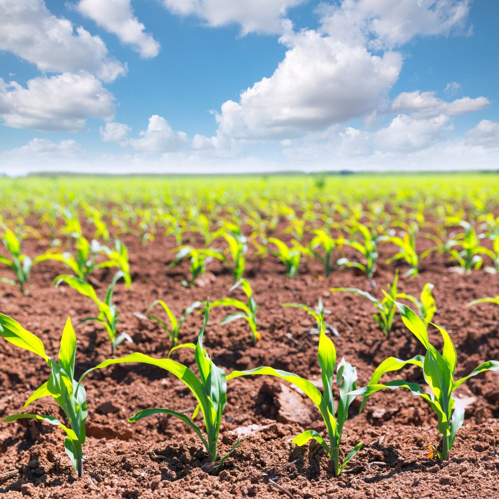 USDA Expects Both Corn and Soybean Acres to Top 90 Million in 2021